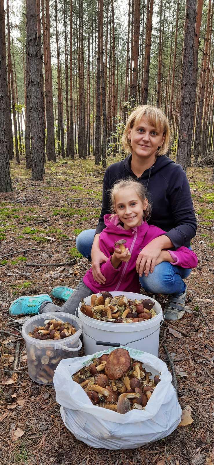 Збір грибів